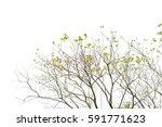 green leaves isolated on white... | Shutterstock . vector #591771623