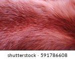 Texture Fox Fur 3