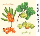 set of berries mix raster... | Shutterstock . vector #591807128