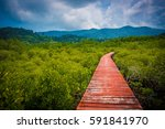 wood walkway bridge in mangrove ... | Shutterstock . vector #591841970