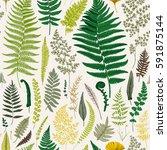 seamless pattern. ferns.... | Shutterstock .eps vector #591875144