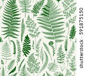 seamless pattern. ferns.... | Shutterstock .eps vector #591875150
