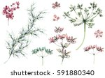 set plants elements   herbs ... | Shutterstock . vector #591880340
