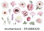 Stock photo set watercolor elements of rose pencil drawing collection garden and wild flowers leaves 591888320
