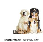 Stock photo set pet on a white background 591932429