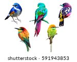 birds | Shutterstock .eps vector #591943853