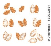 almond icon  | Shutterstock . vector #592013594