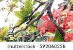 beautiful flower floral garden... | Shutterstock . vector #592060238
