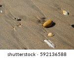 shells on the sand | Shutterstock . vector #592136588