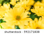 Yellow Daisy Bouquet Macro...