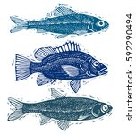 set of vector fishes  different ... | Shutterstock .eps vector #592290494