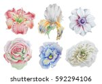 set with flowers. rose. peony.... | Shutterstock . vector #592294106