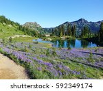 Small photo of Field of wildflowers on the Pacific Crest Trail in Washington state in summer of 2016. This is in the Wenatchee National Forest. This trail also offers views of Mount Rainier.