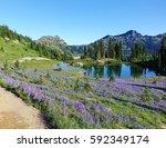 field of wildflowers on the... | Shutterstock . vector #592349174