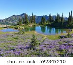 wildflowers and a small alpine... | Shutterstock . vector #592349210