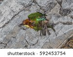 top view and close up photo of...   Shutterstock . vector #592453754