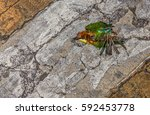 top view and close up photo of...   Shutterstock . vector #592453778
