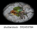 top view and close up photo of...   Shutterstock . vector #592453784