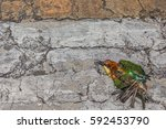 top view and close up photo of...   Shutterstock . vector #592453790