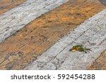 close up photo of bird carcass...   Shutterstock . vector #592454288