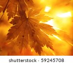 Rainbow Rays  Yellow Maple Leaf