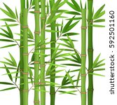 stalks of bamboo with green... | Shutterstock .eps vector #592501160