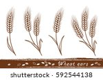 isolated wheat ears set with... | Shutterstock .eps vector #592544138