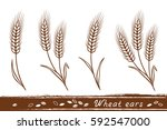 isolated wheat ears set with... | Shutterstock . vector #592547000