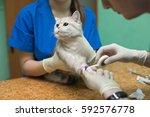 veterinary placing a catheter... | Shutterstock . vector #592576778