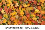 Colorful Background Of Autumn...