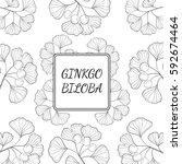 ginkgo biloba plant  leaf ... | Shutterstock .eps vector #592674464