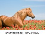 Portrait Of Beautiful Stallion...