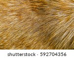 Dog Fur Background