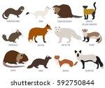 fur farming. flat design.... | Shutterstock .eps vector #592750844