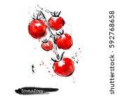 watercolor tomato sketch. food... | Shutterstock . vector #592768658
