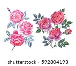 watercolor hand painted roses.... | Shutterstock . vector #592804193