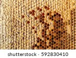 ambrosia. honeycombs with honey.... | Shutterstock . vector #592830410