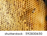 ambrosia. honeycombs with honey ... | Shutterstock . vector #592830650