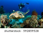 Small photo of Turtle and diver