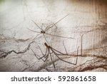 Dramatic Large House Spider...