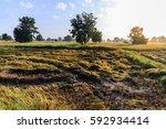 tractor harvester tracks in... | Shutterstock . vector #592934414