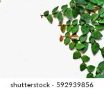 coat buttons on white wall | Shutterstock . vector #592939856