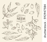 collection of neem  leaves and... | Shutterstock .eps vector #592947584