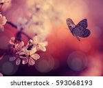 butterfly and cherry blossoms... | Shutterstock . vector #593068193
