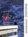 Small photo of Alpine chough, mountains and Swiss flag in the background, Switzerland