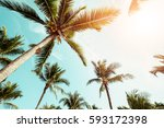 coconut palm tree on beach with ... | Shutterstock . vector #593172398