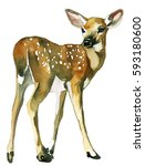 deer baby fawn watercolor... | Shutterstock . vector #593180600