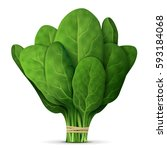 bunch of fresh spinach close up.... | Shutterstock . vector #593184068