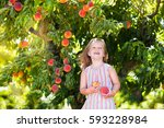 little girl picking and eating... | Shutterstock . vector #593228984