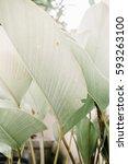 green leaf plants near beige... | Shutterstock . vector #593263100